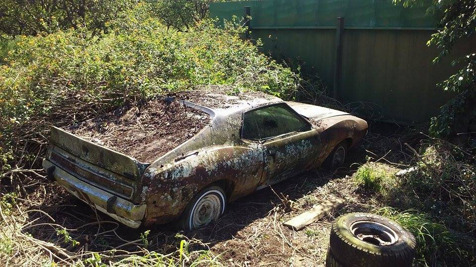 Can anyone verify if this is a 1972 AMC AMX? It was apparently abandoned and overgrown with bushes.